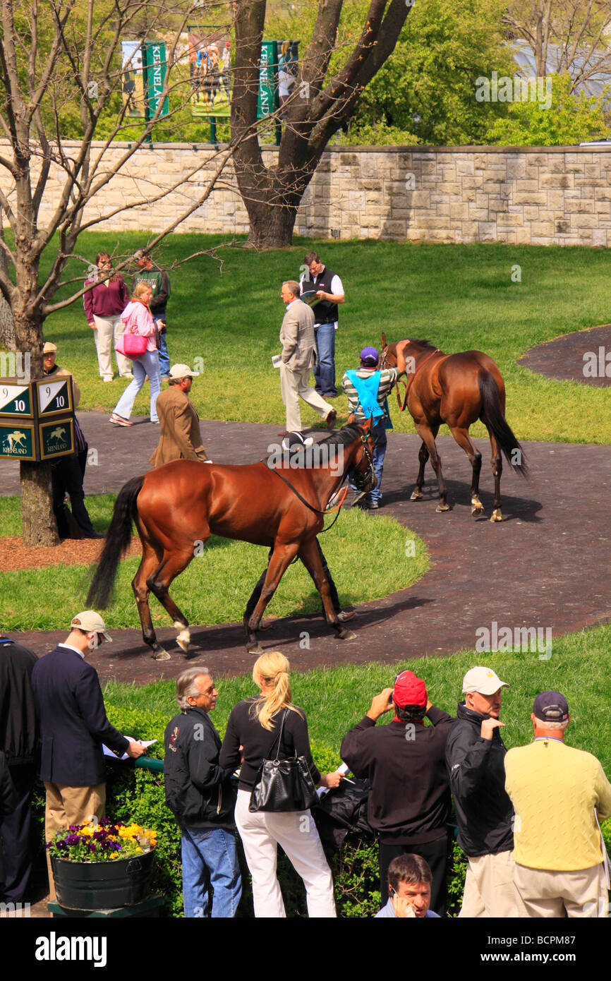 Spectators watch thoroughbreds walk through the paddock prior to a race Keeneland Race Course Lexington Kentucky - Stock Image