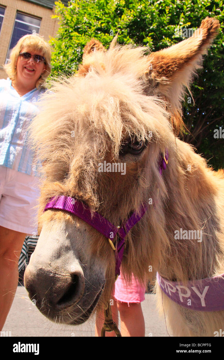 Zippy The Animal Shelter Fundraising Burrow Leaf and String Festival Galax Virginia Stock Photo