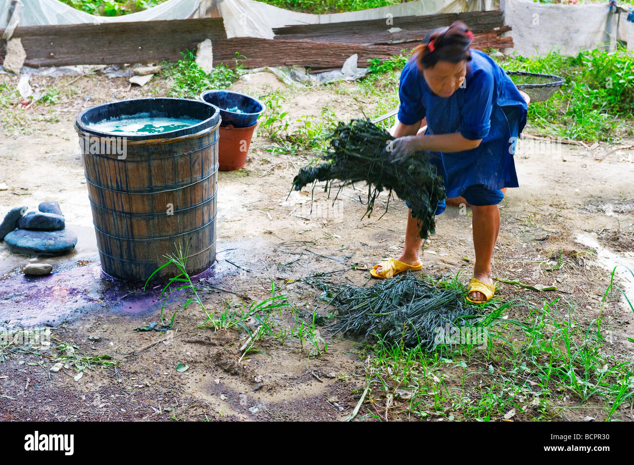 Miao woman soaking plants to extract plant color used in wax dyeing, - Stock Image