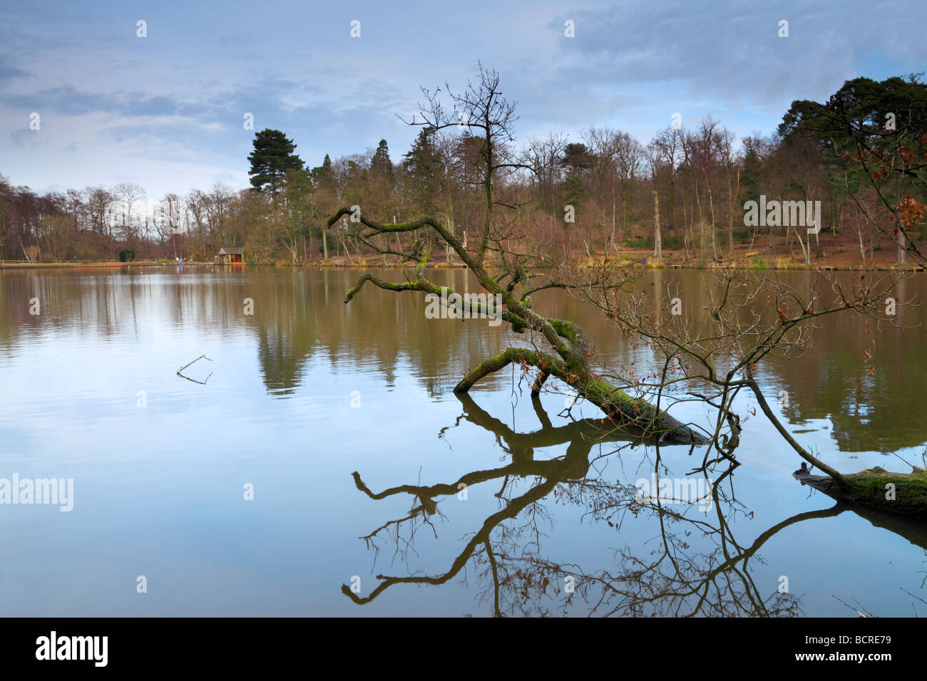Douster pond, Bucham country park, Crawley, West Sussex - Stock Image