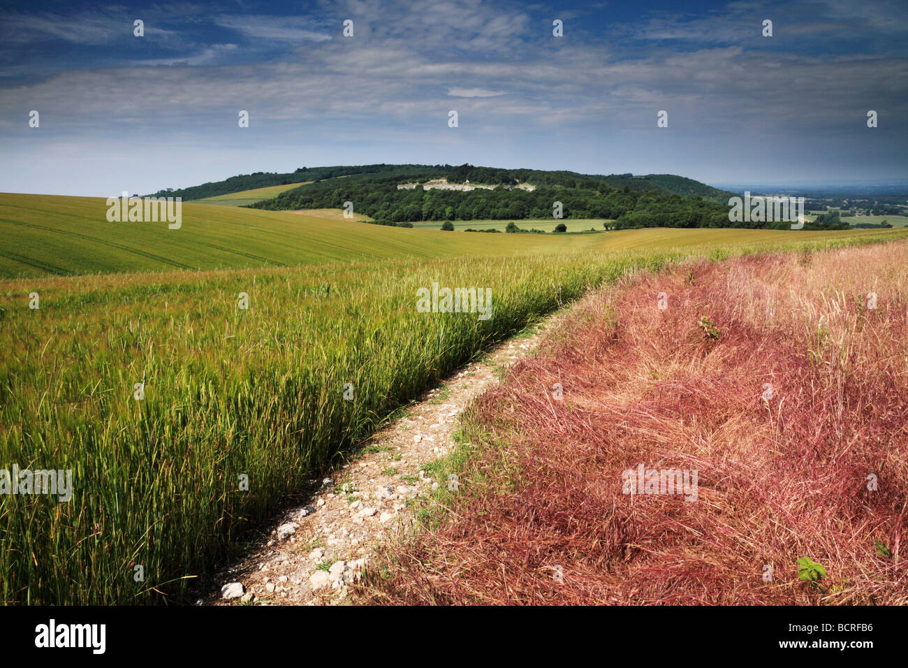 Woolavington Down from Duncton Down, West Sussex - Stock Image