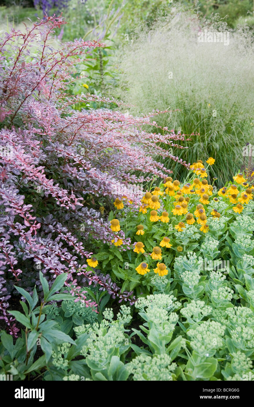 Pastel colours in herbaceous border, in country house garden, Berkshire. - Stock Image