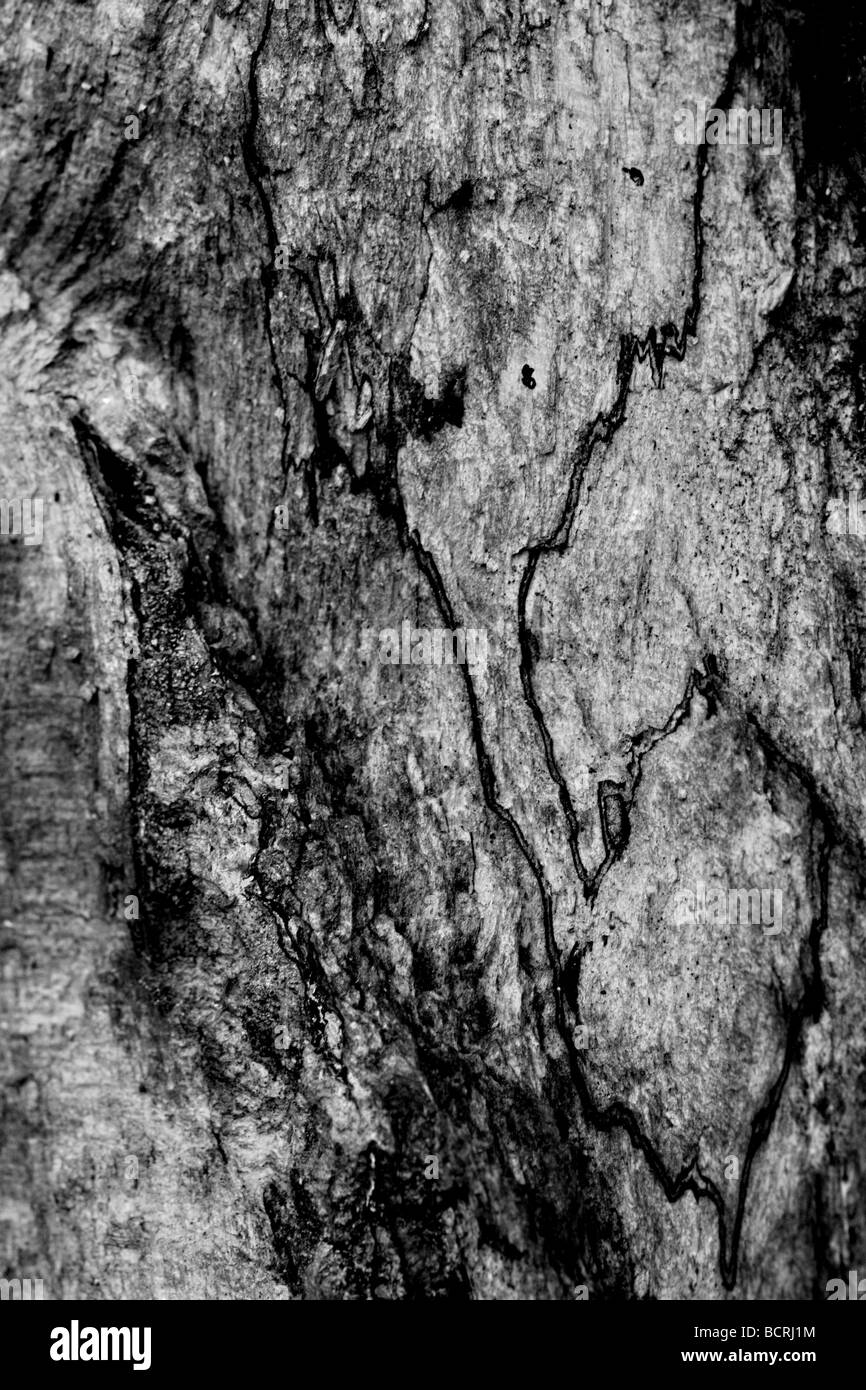 macro image from the curst of a dead tree converted in black & white - Stock Image