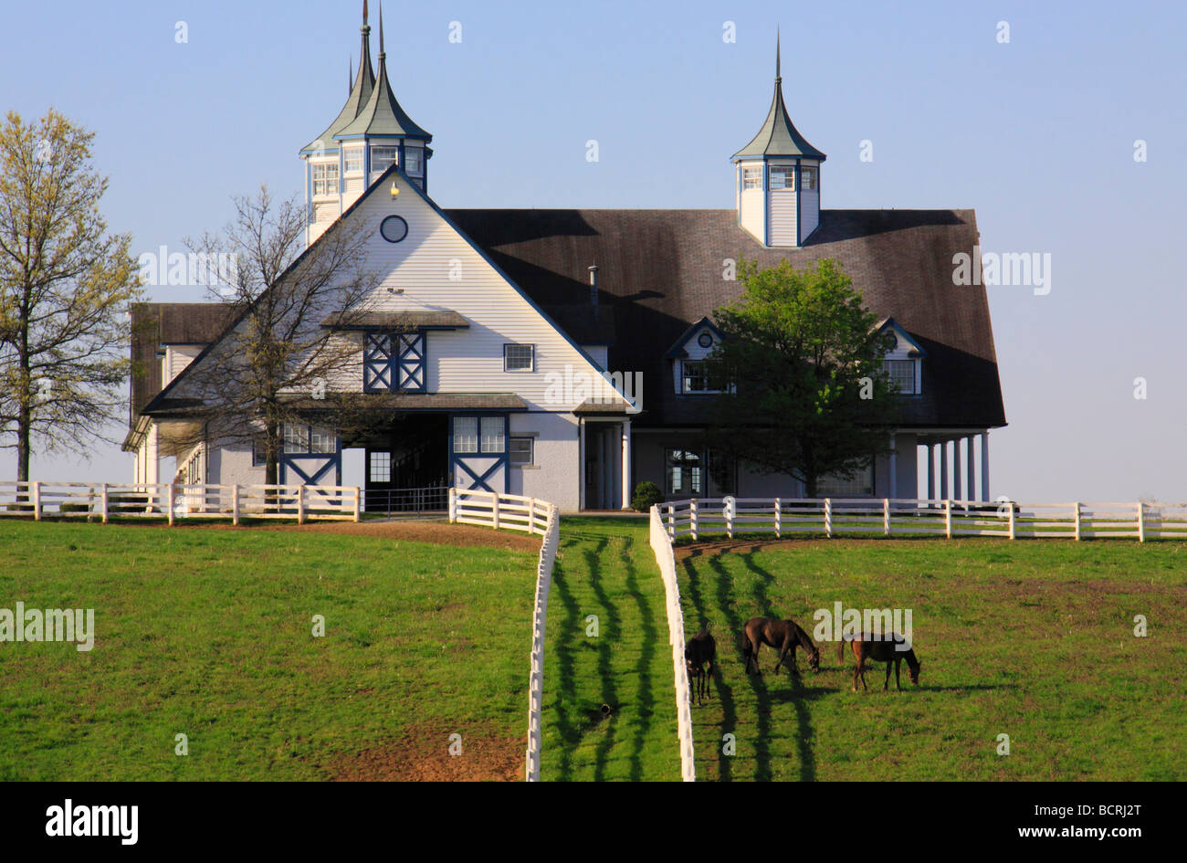 Thoroughbreds graze at Calumet Farm in Lexington Kentucky - Stock Image