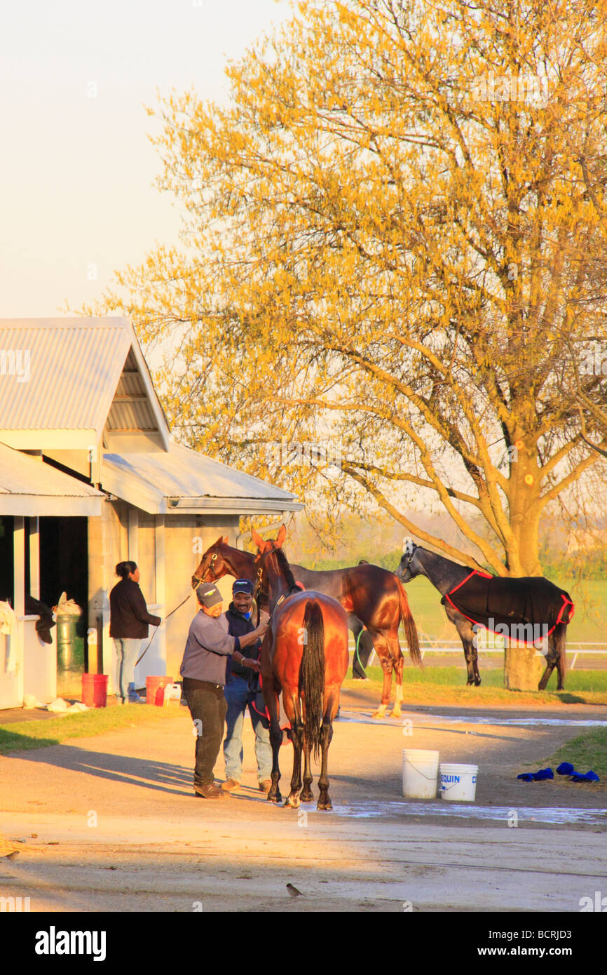 Groomers tend to thoroughbreds during Early morning workout at Keeneland Race Course Lexington Kentucky - Stock Image