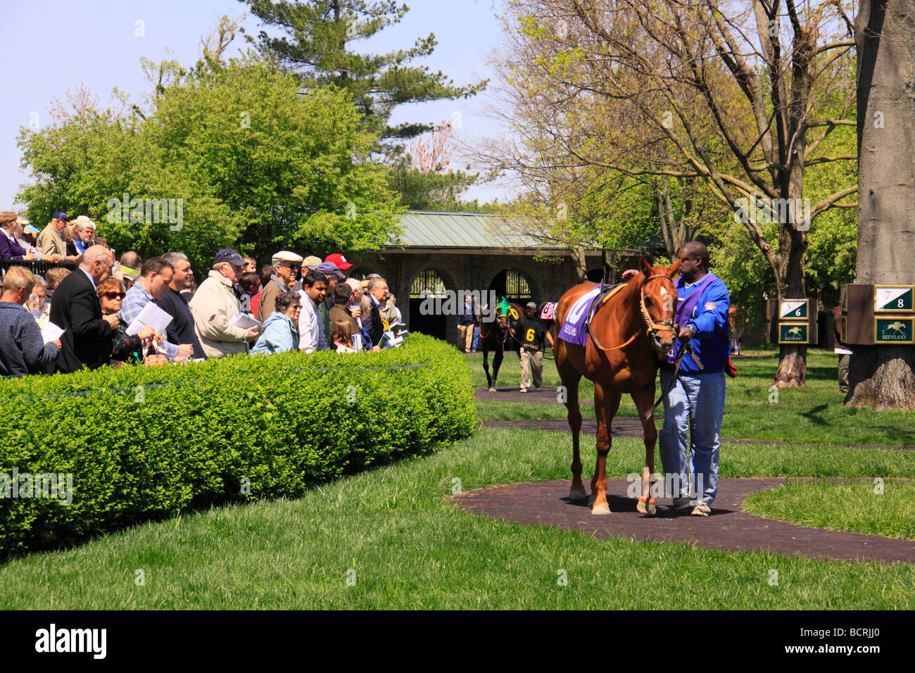 Spectators watch thoroughbreds warm up in paddock before a race at Keeneland Race Course Lexington Kentucky - Stock Image