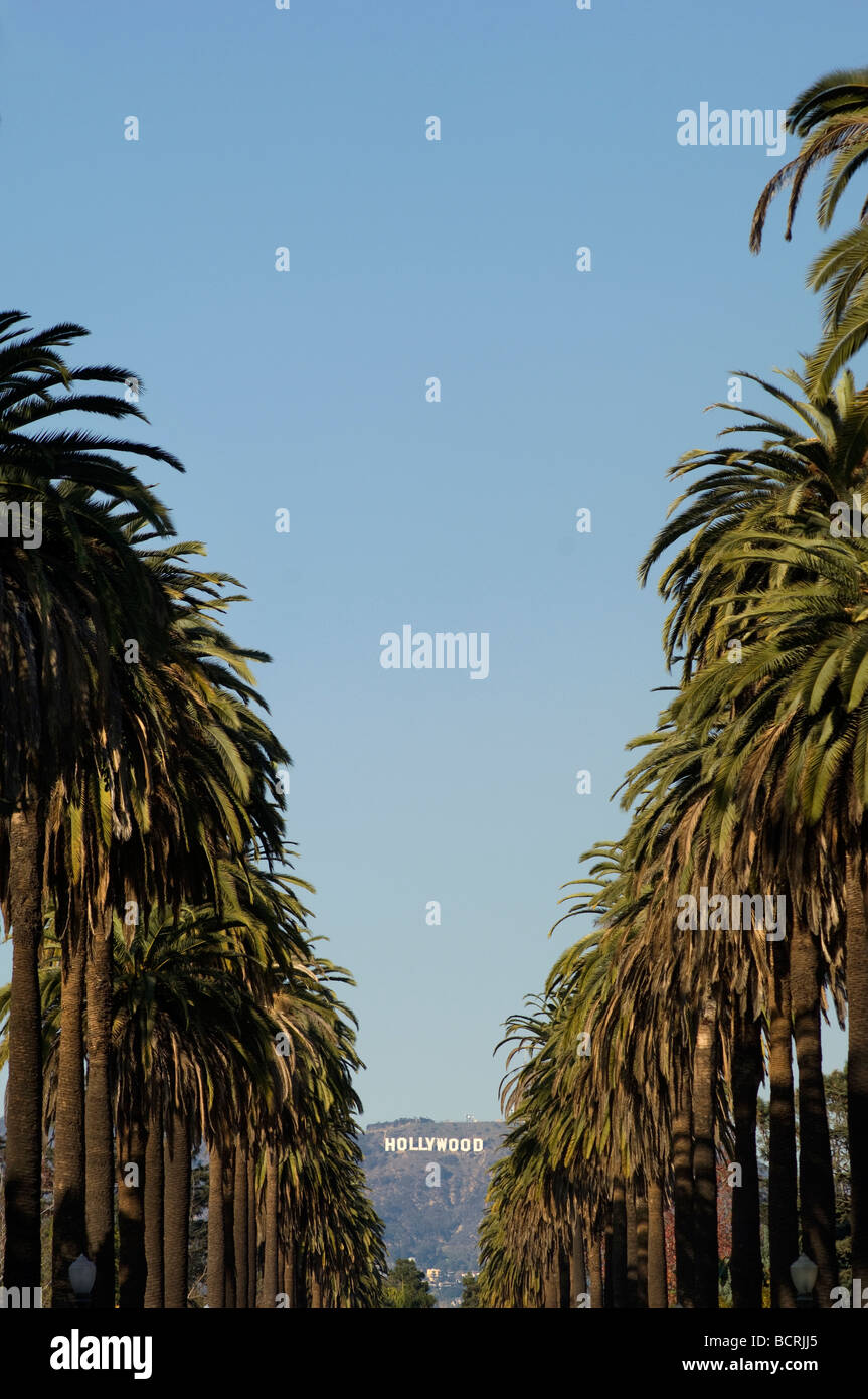 Los Angeles Palm Trees Hollywood Sign Stock Photos Los Angeles