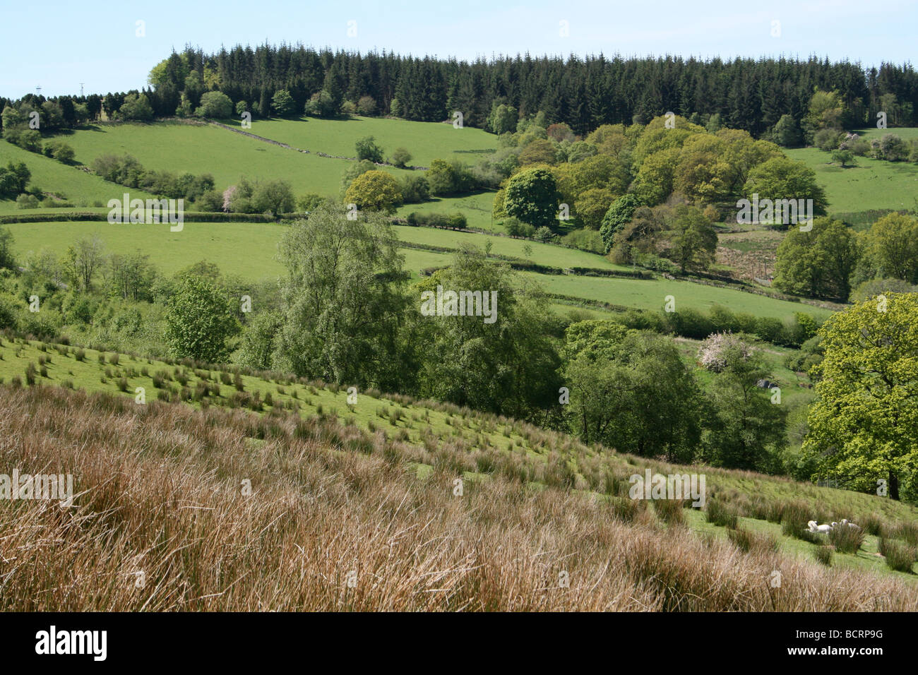 Farmland And Forest Beside Lake Vyrnwy, Powys, Wales, UK - Stock Image