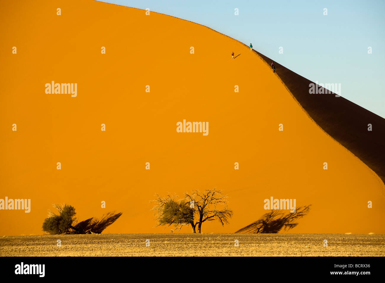 africa Namibia Sossusvlei dune sand bush tree dry dried shade form Vlei desert waste land wilderness waste cold - Stock Image