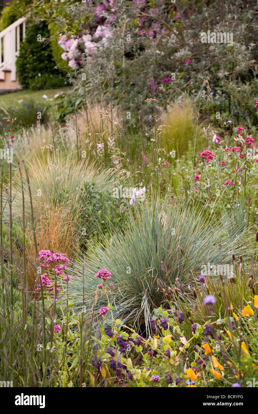Ornamental bunch grasses (Helictotrichon, Nassella) in Amy Stewart's front yard flowery no lawn cottage garden, - Stock Image