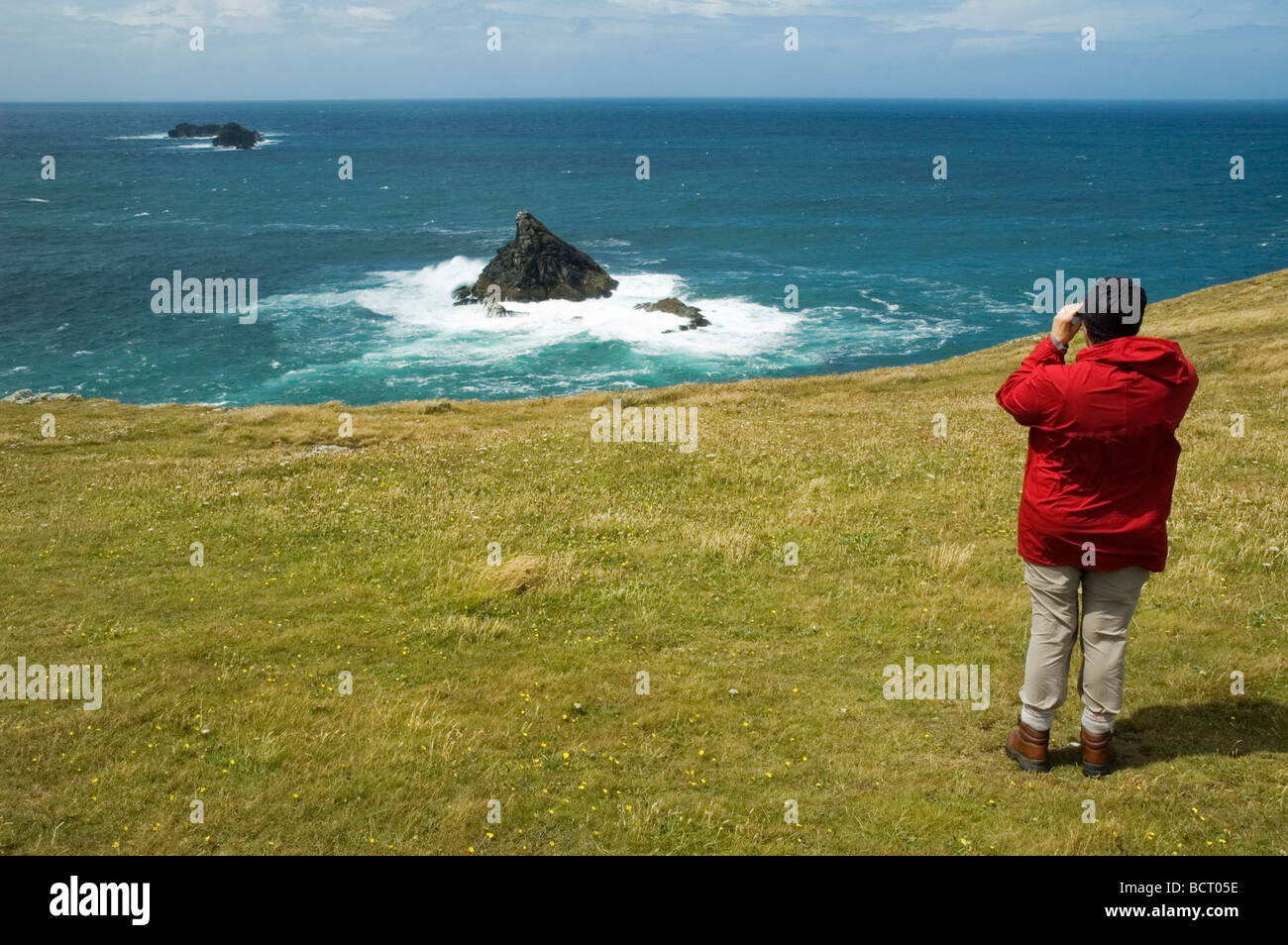 Female walker birdwatching on the South West Coastal Path at Dinas Head, North Cornwall - Stock Image