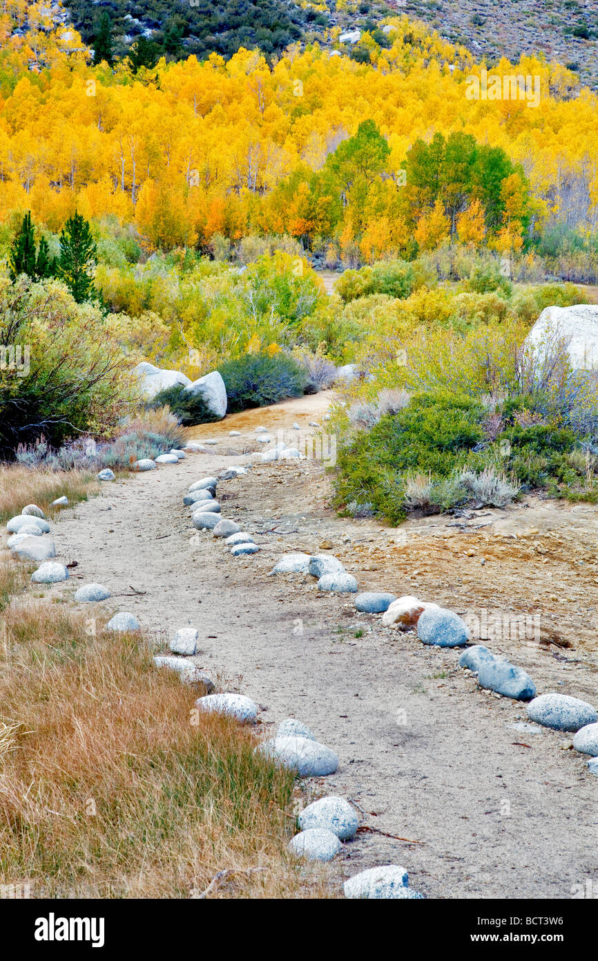 Rock path with fall colored aspens Inyo National Forest Eastern Sierras California - Stock Image