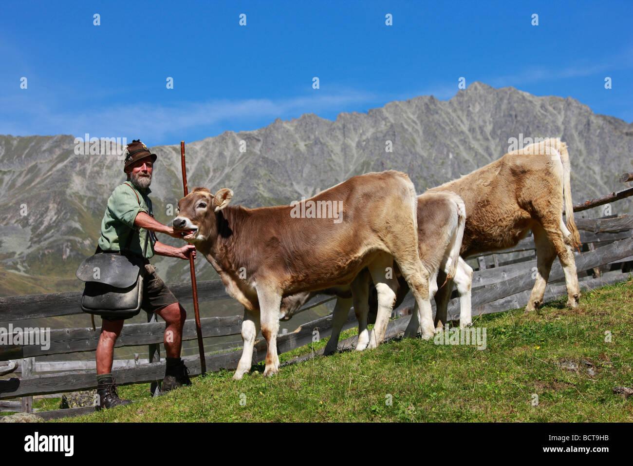 Alp shepherd on the Gleirsch Alm mountain pasture, Sellrain, Sellrain Group, Tyrol, Austria, Europe - Stock Image