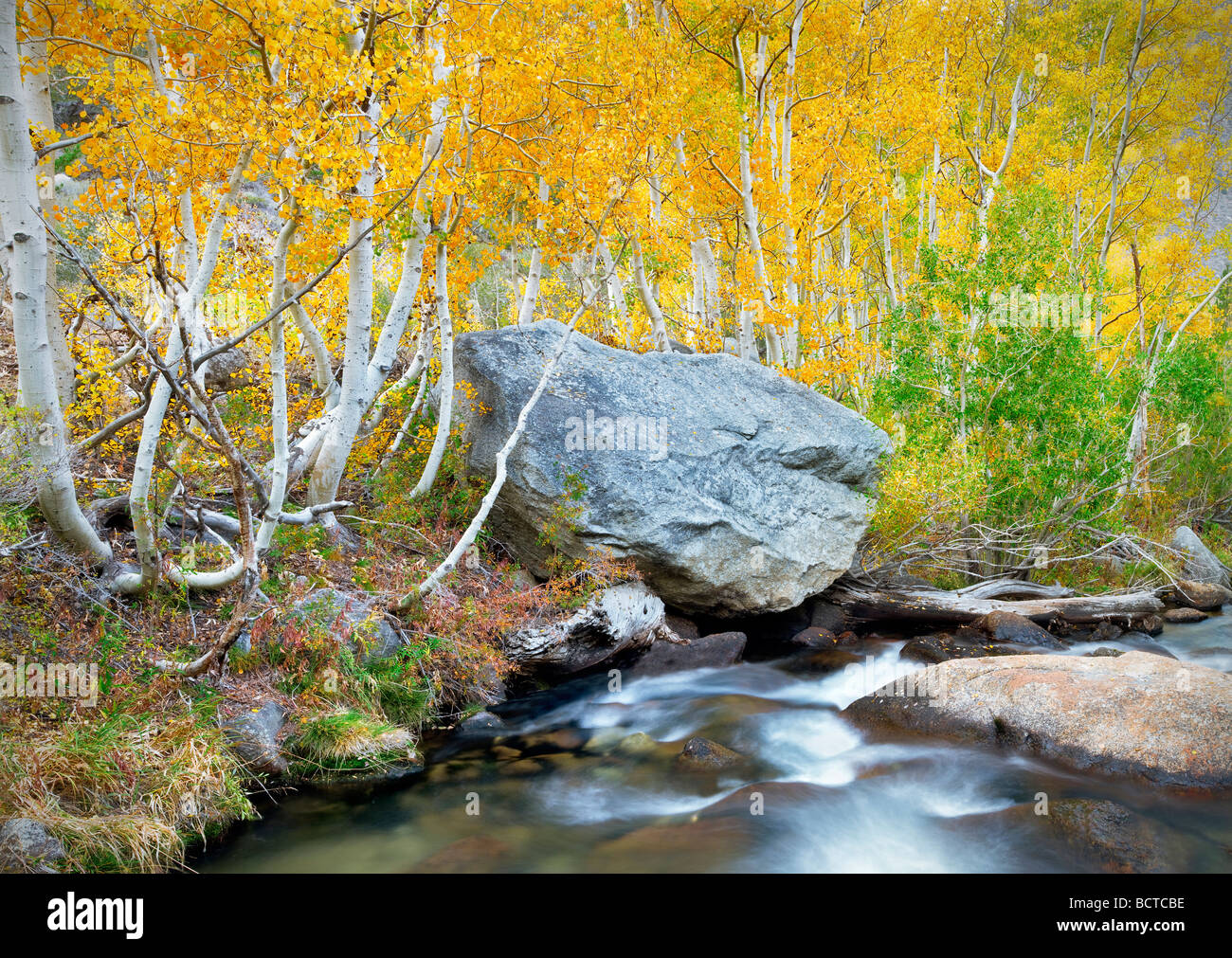 South fork Bishop Creek with fall colored aspens Inyo National Forest Eastern Sierras California - Stock Image