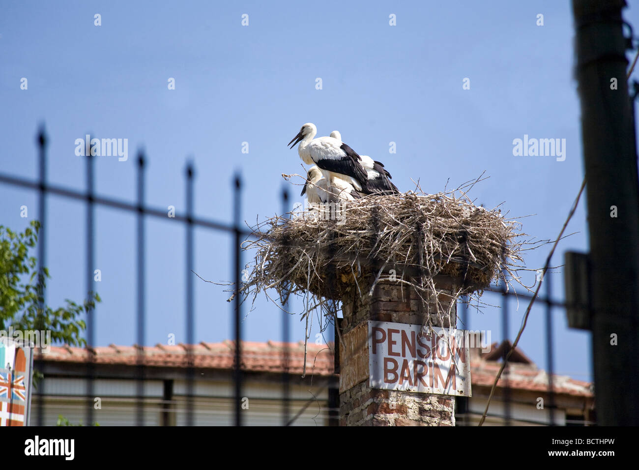 Storks nest on top of chimney at Pension Barim in Selcuk Ephesus Turkey. - Stock Image