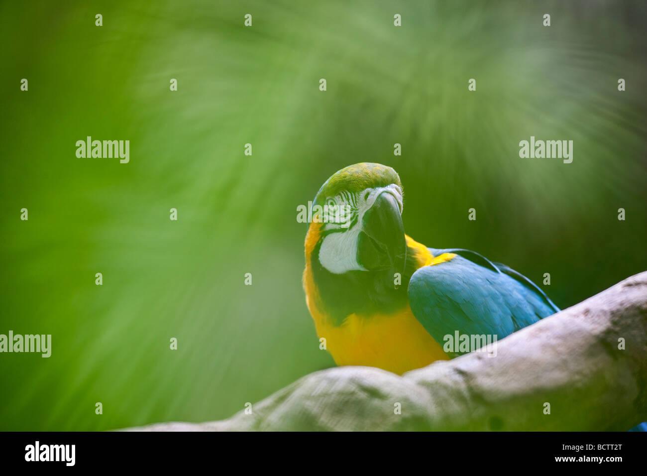 Macaw through vegetation Grand Hyatt Kauai Hawaii - Stock Image