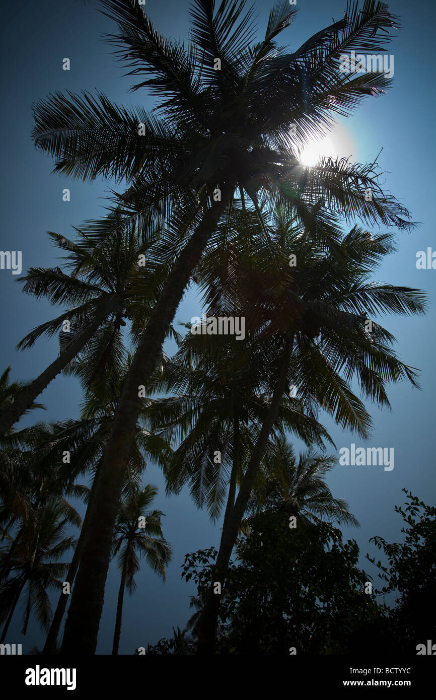 SILHOUETTED PALM TREES SHOT INTO THE SUN AGAINST A BLUE SKY IN REKAWA, SRI LANKA. - Stock Image