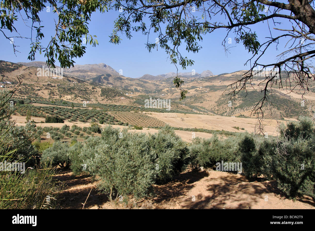 Landscape with olive groves, near Antequera, Malaga Province, Andalusia, Spain Stock Photo