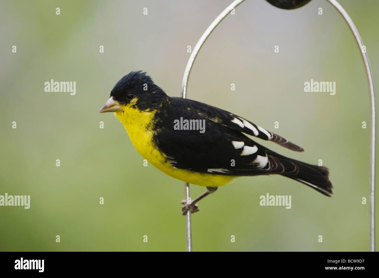 credit conservation thistle tube a york photo bird cc choosing audubon feeders likeaduck feeder flickr new