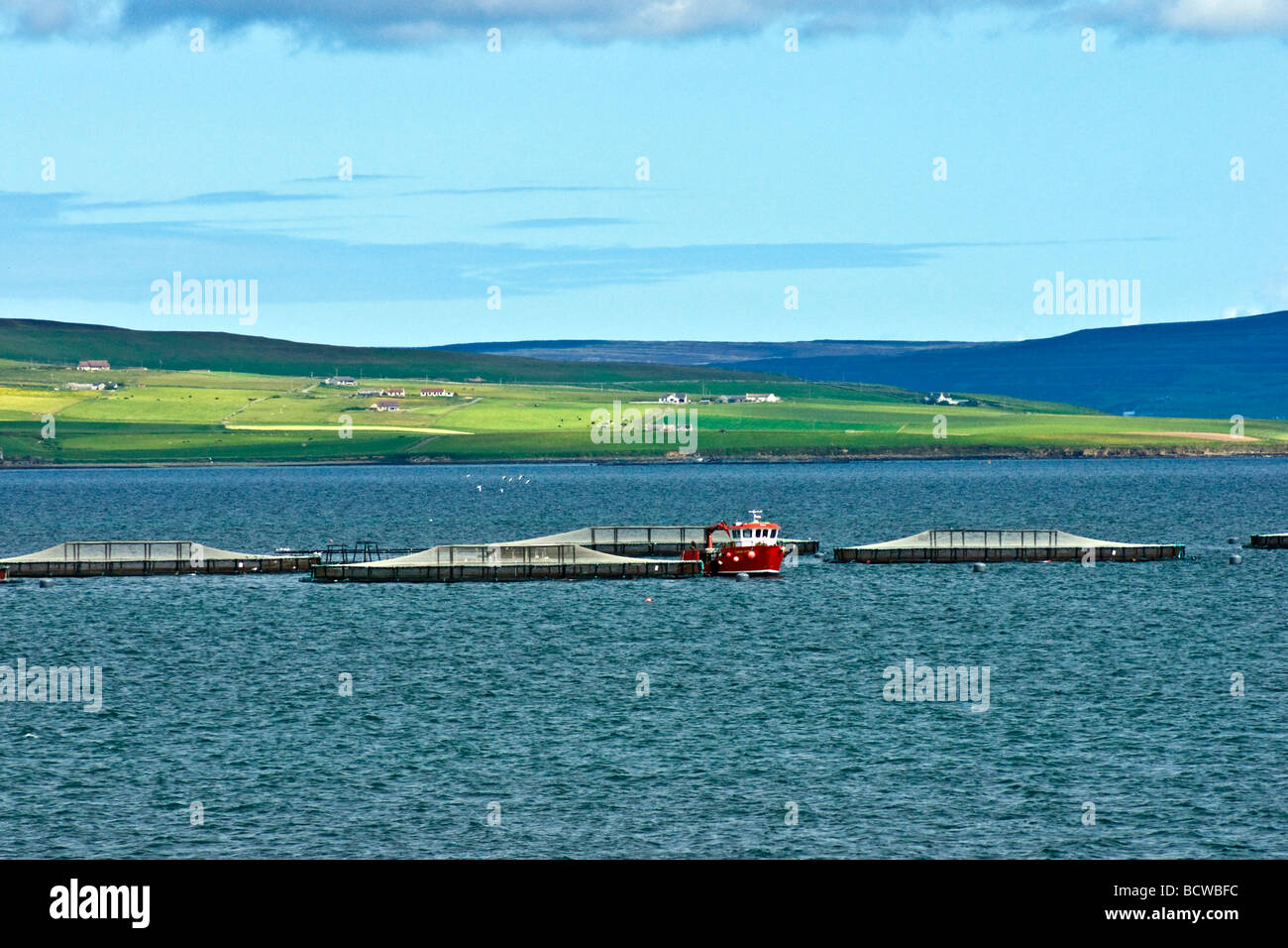 Fish farm at Kirkwall in Orkney Scotland - Stock Image