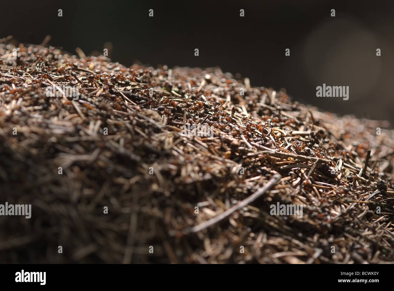 The top of ant hill - Stock Image