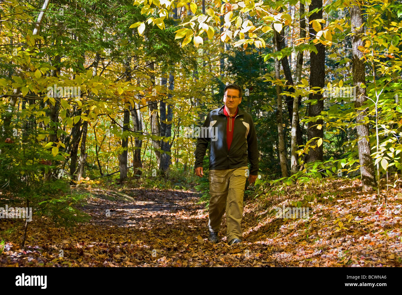 Man walking on a forest trail Autumn Vermont - Stock Image