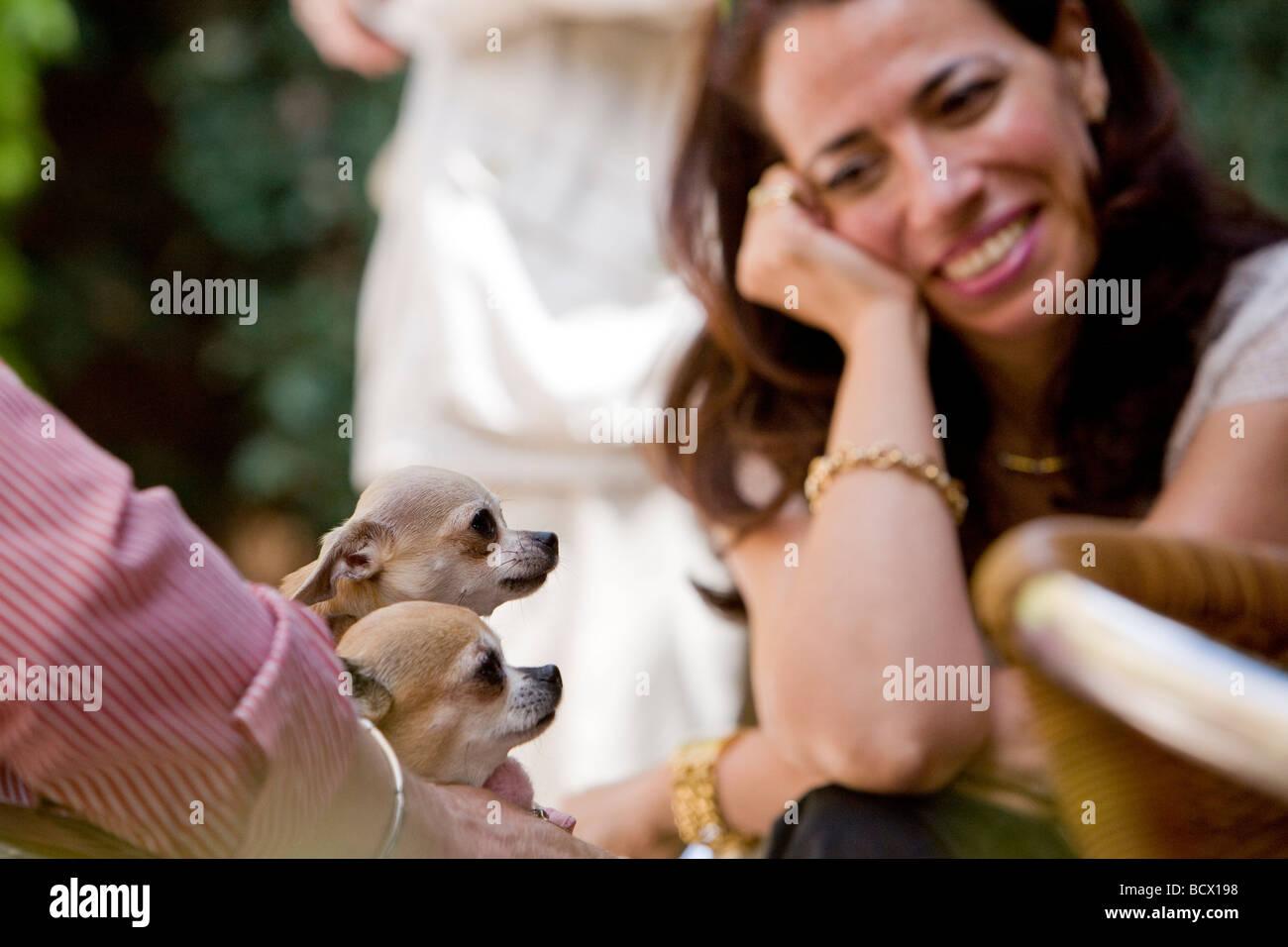 Chihuahua love - Stock Image