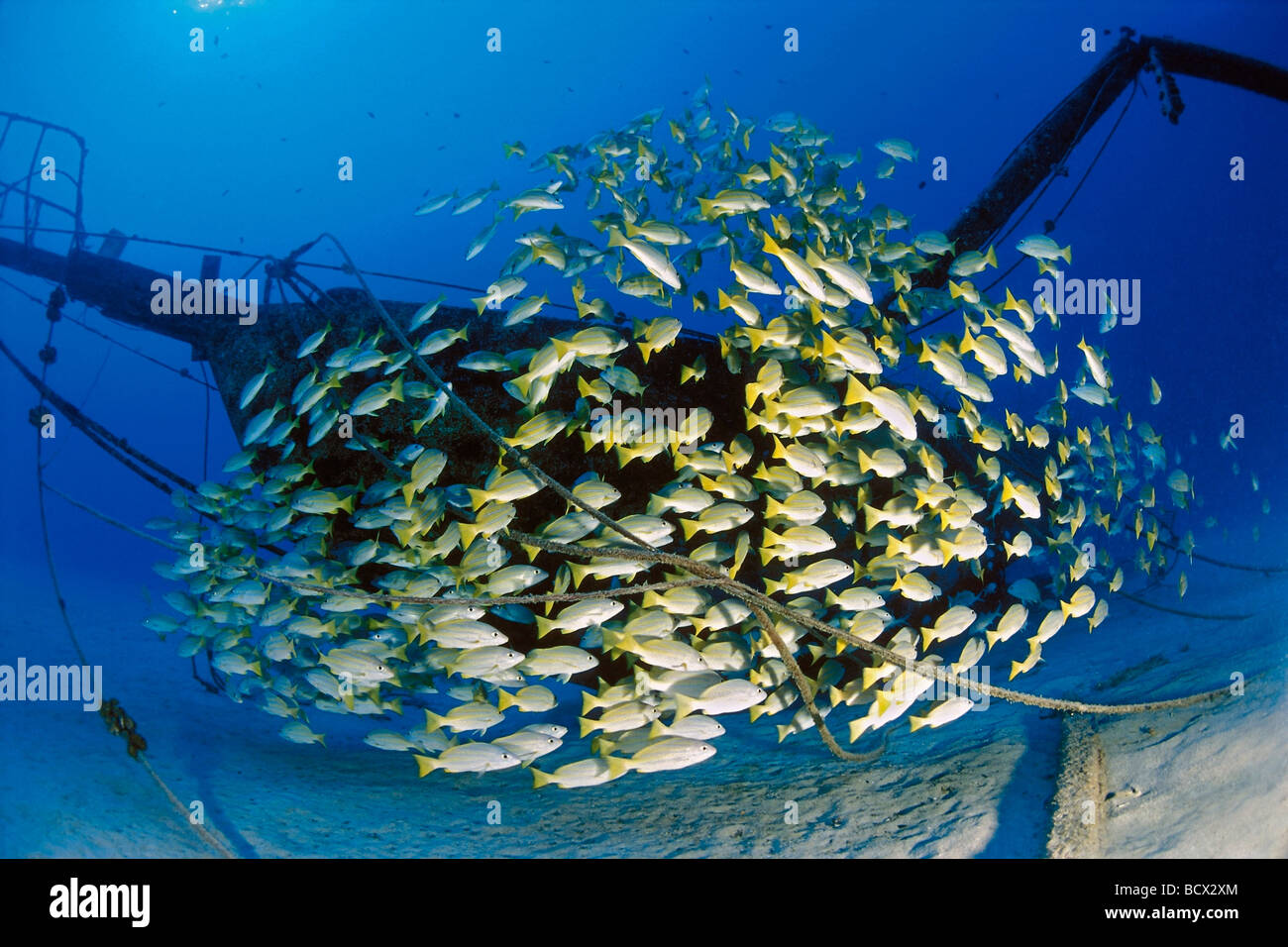 Snappers Stock Photos Amp Snappers Stock Images Alamy