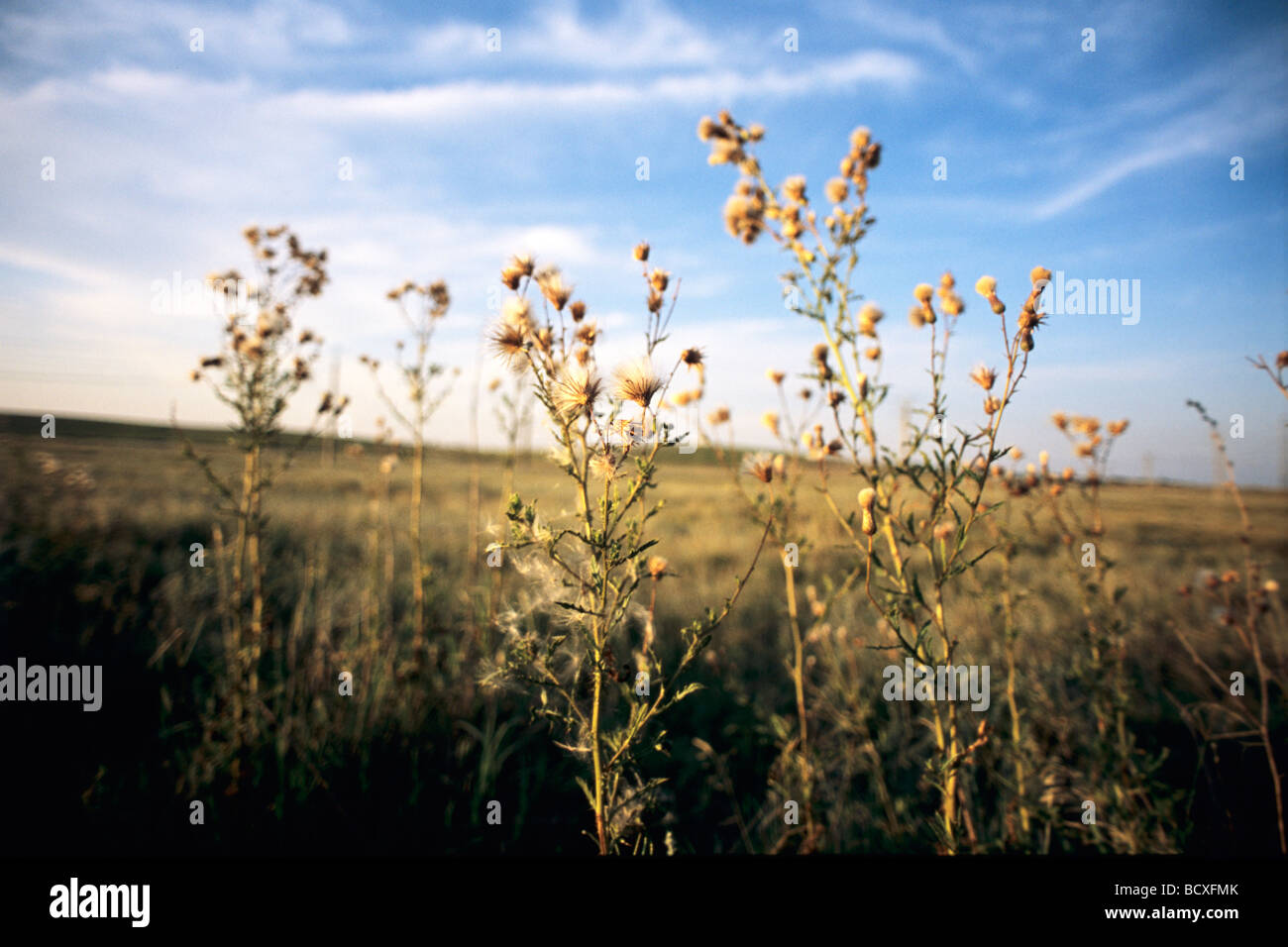 flowers, plants in a field with blue sky in background - Stock Image