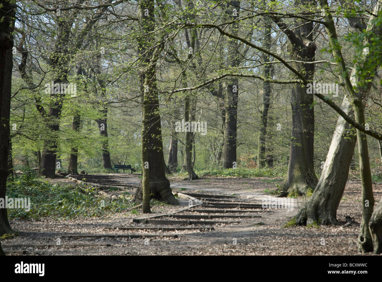 Queen Wood Highgate, North London - Stock Image