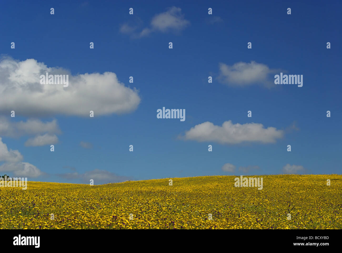 Wiese meadow 19 - Stock Image