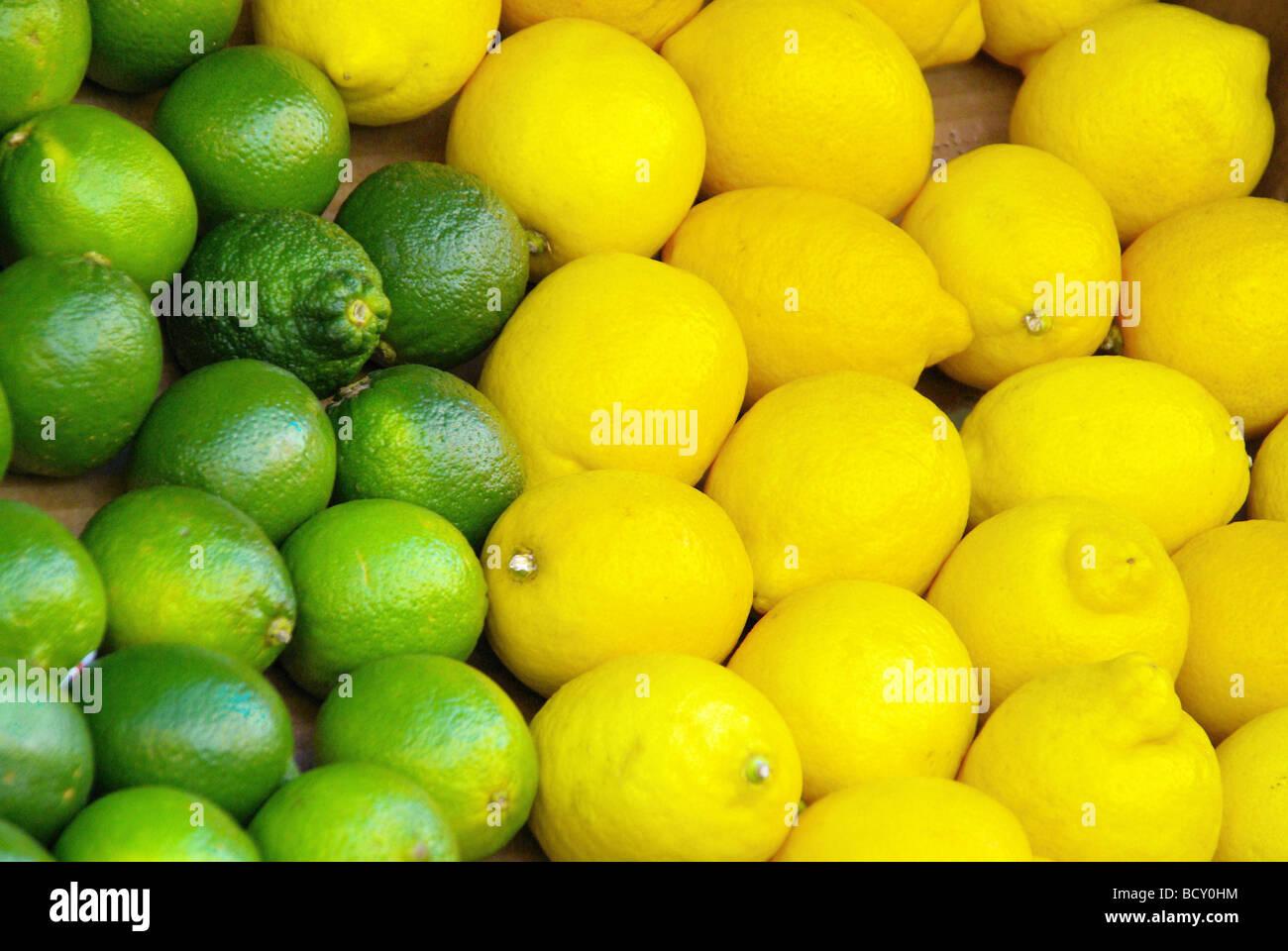 Limone Zitrone lime citrous 01 Stock Photo