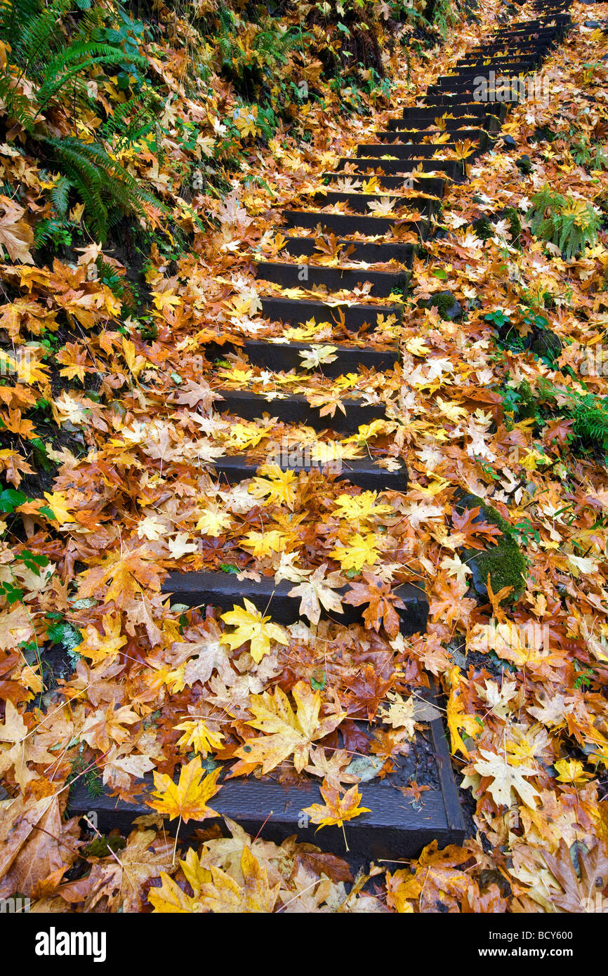 Steps at Bridal Veil Falls with fall color Columbia River Gorge National Scenic Area Oregon - Stock Image