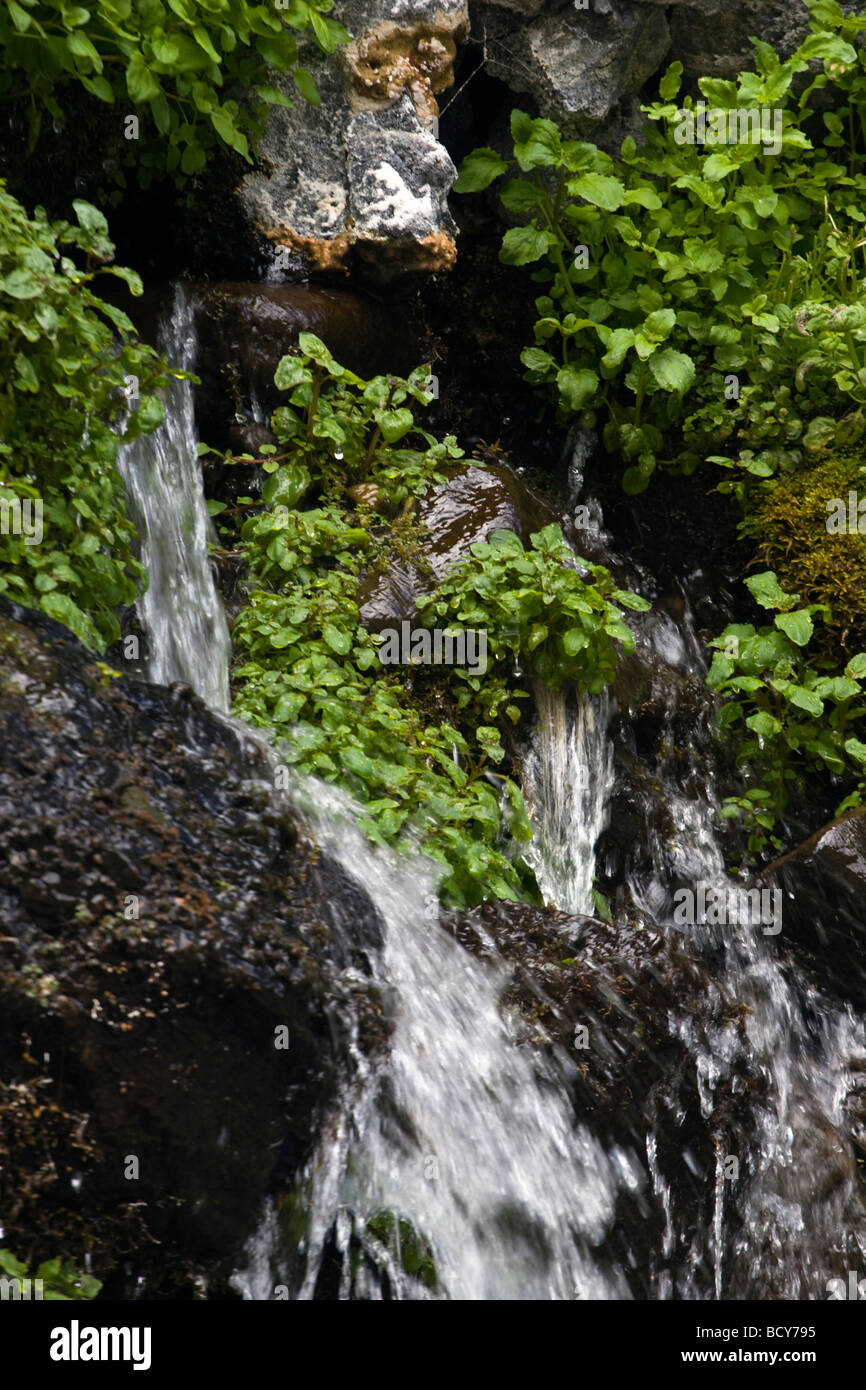 PLANTS grow in a NATURAL SPRING seeps from volcanic rock along the wild and scenic OWYHEE RIVER EASTERN OREGON - Stock Image