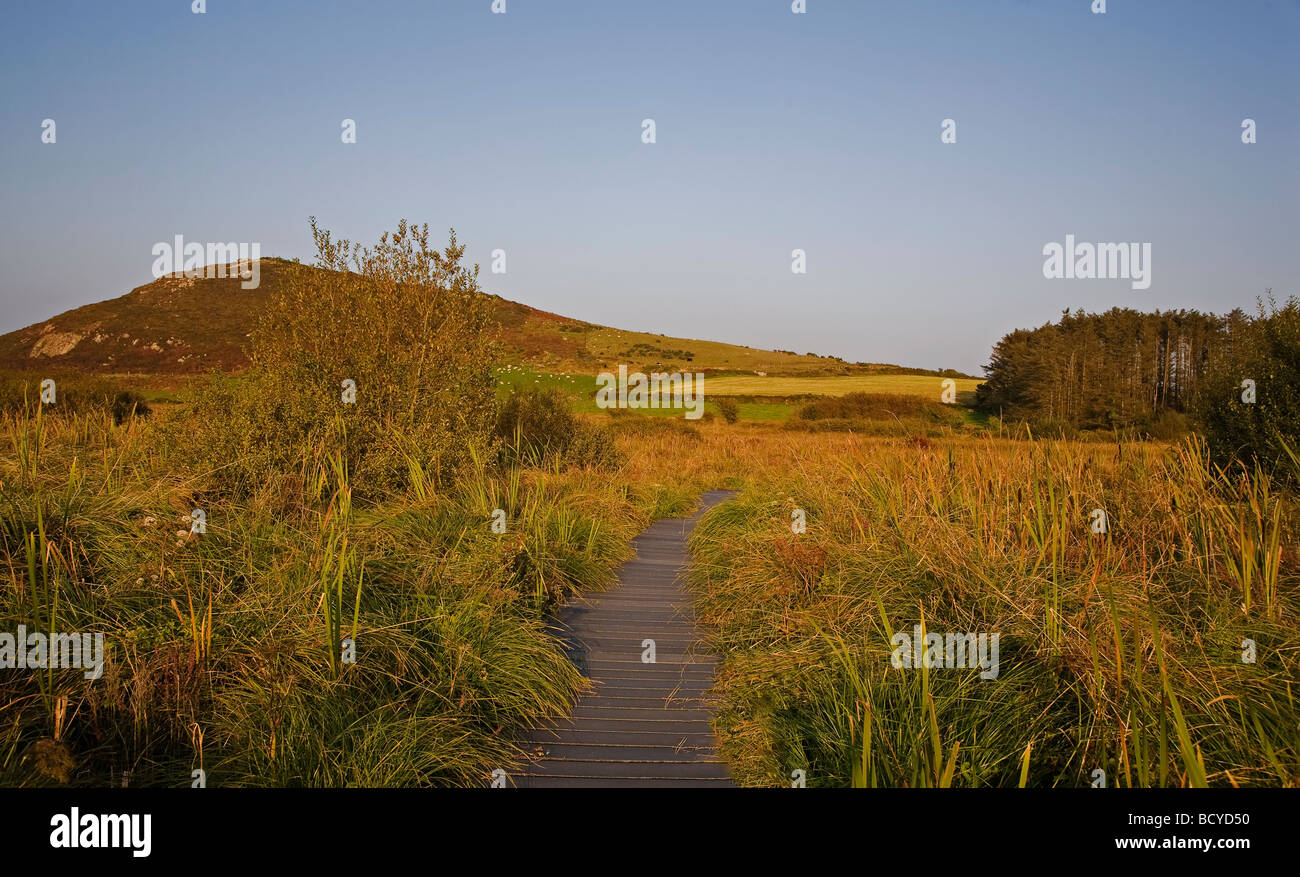 Walkway on the Preserved and Managed Bog, Fenor, County Waterford, Ireland - Stock Image
