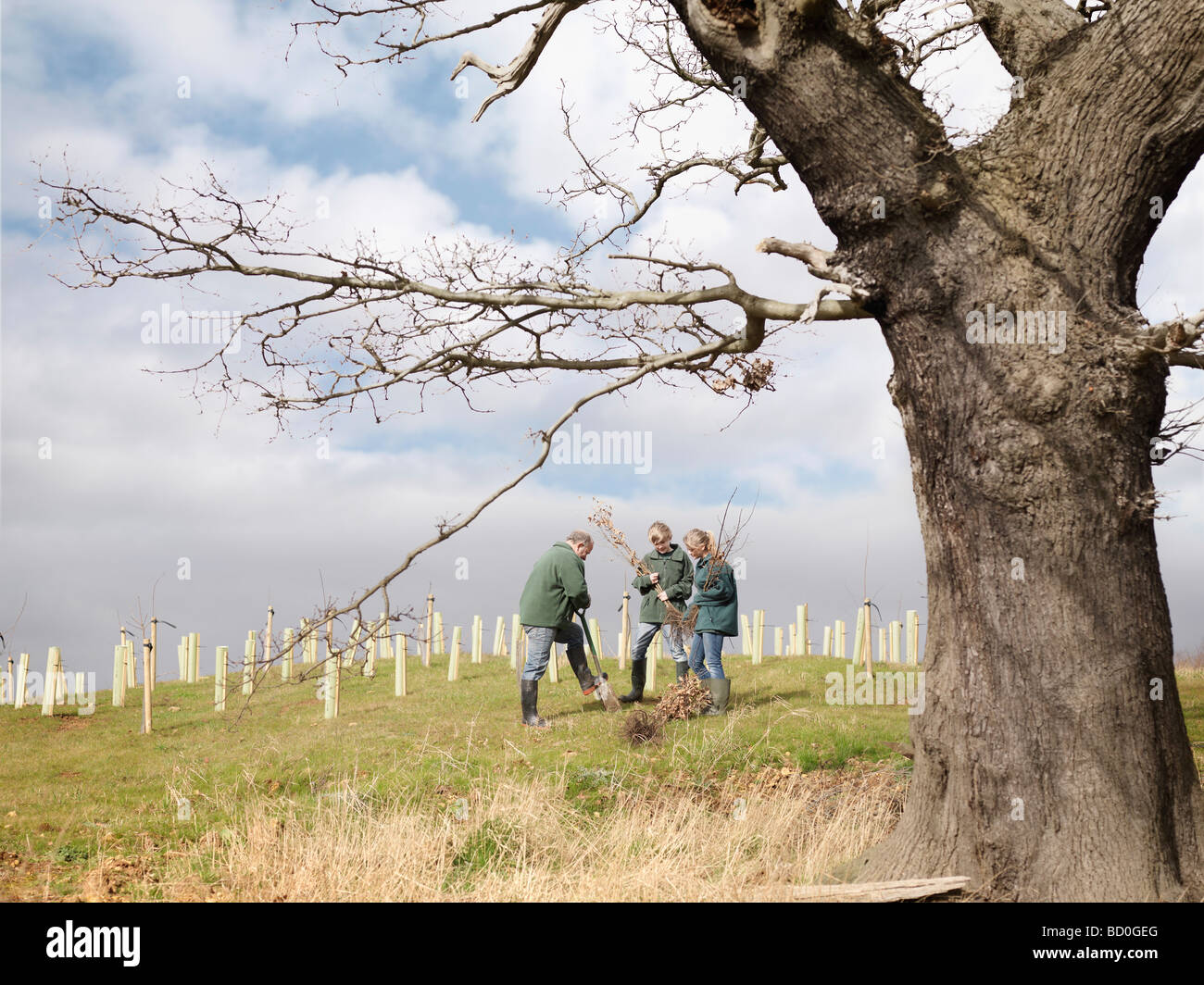 Man And Children Planting Young Trees Stock Photo