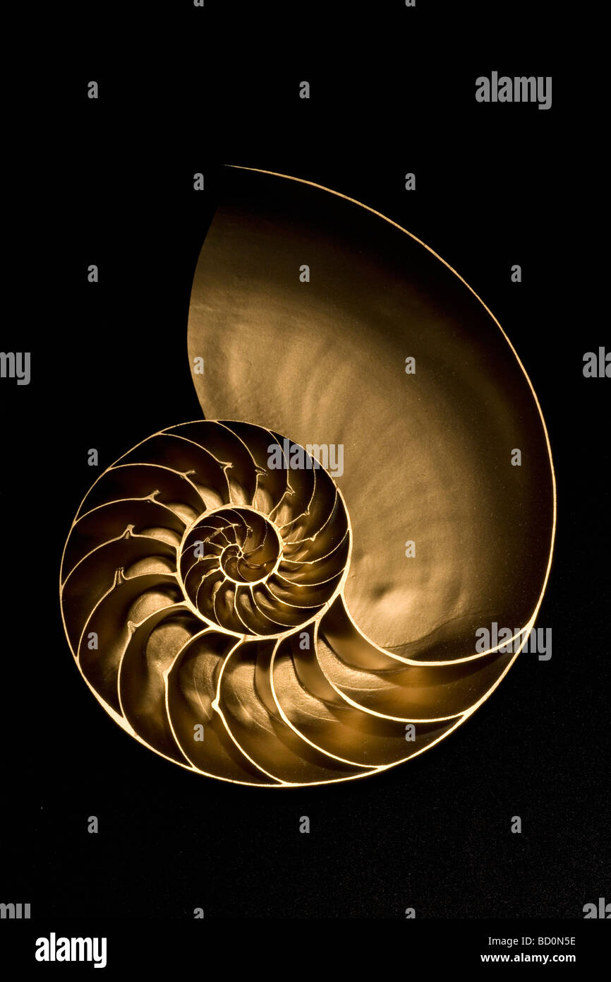 Golden nautilus shell on black sand - Stock Image