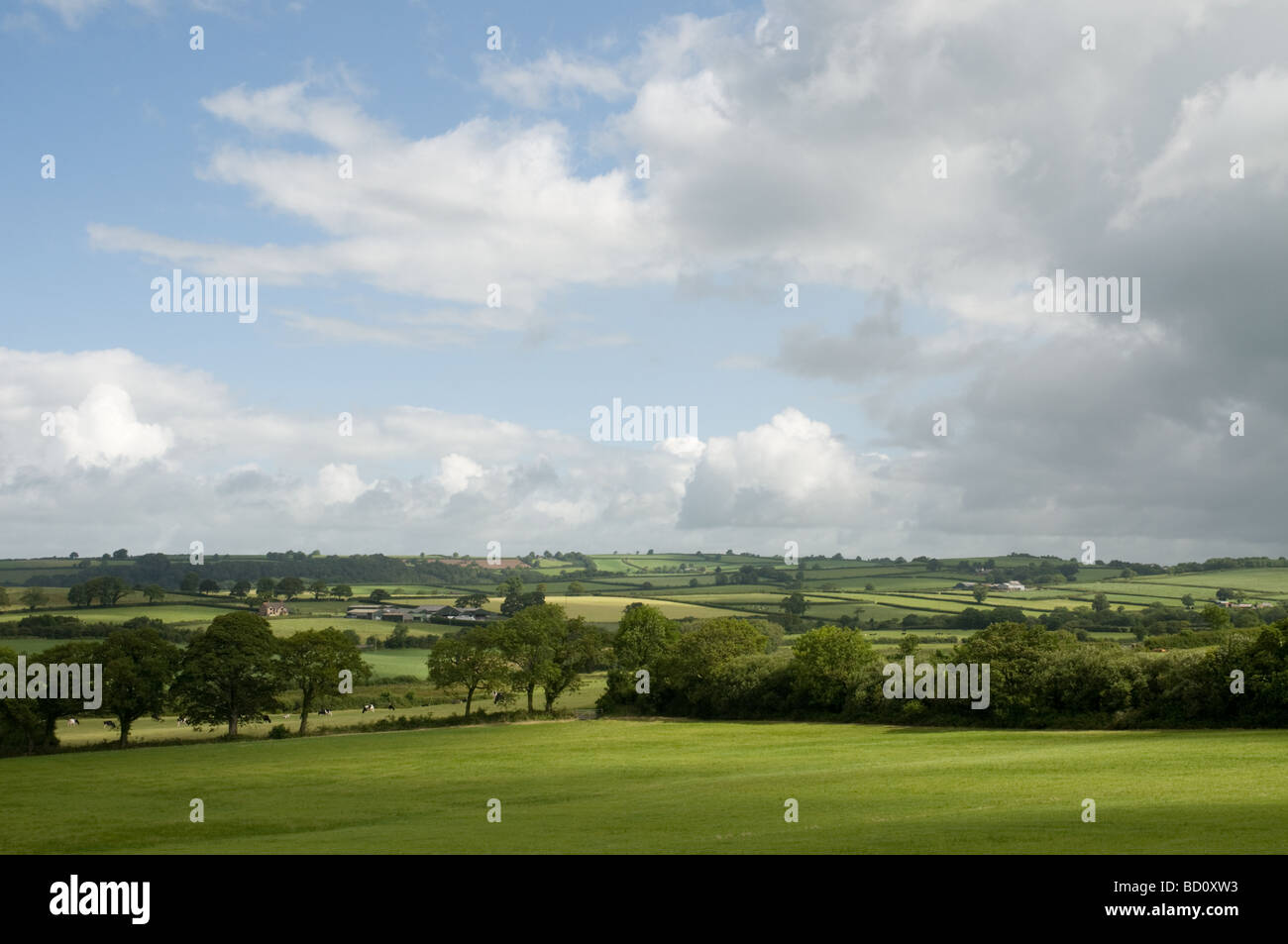 View of lush green fields at St.Clears Carmarthenshire with a blue sky and clouds - Stock Image