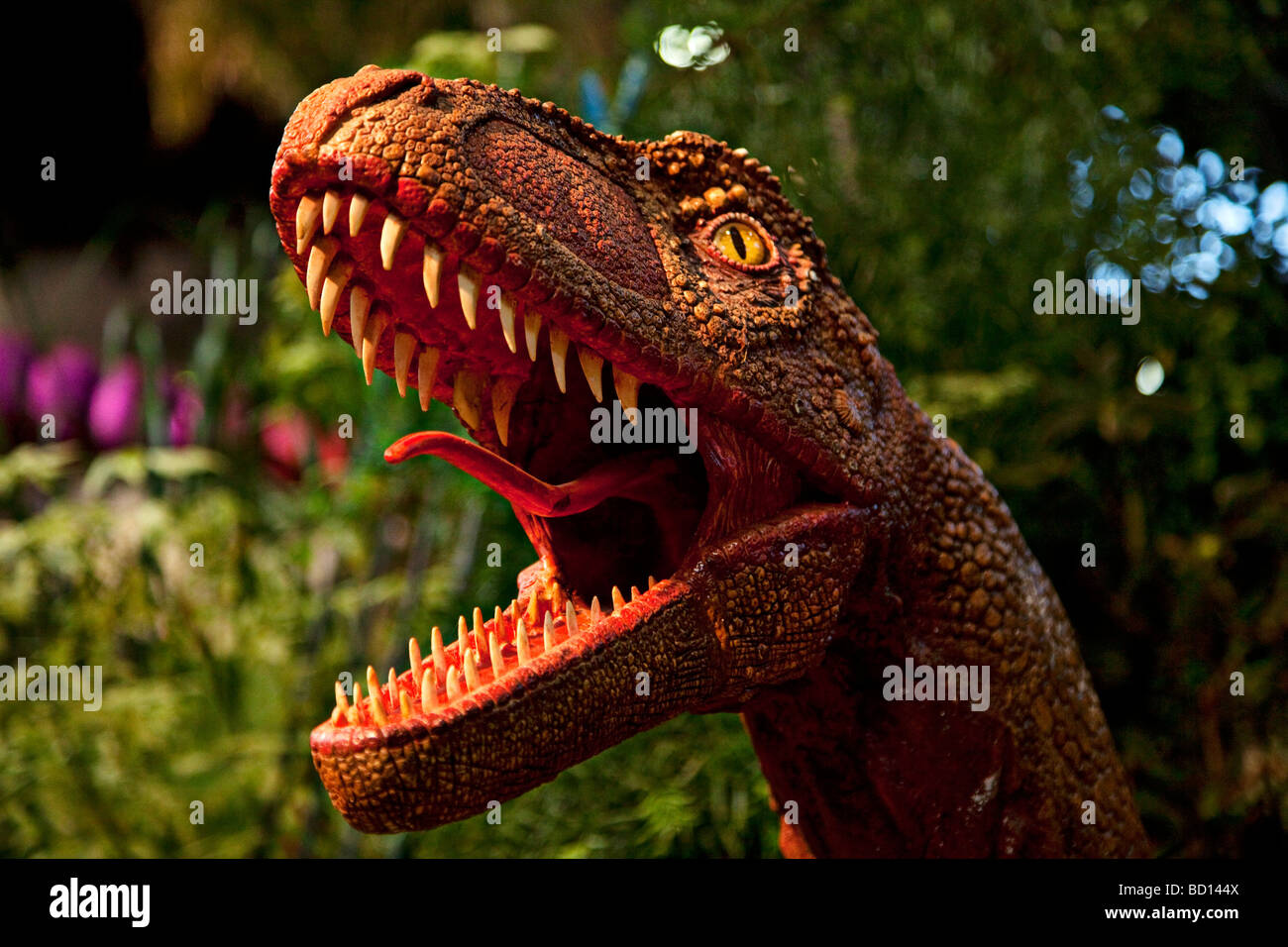 Dinosaur raptor - Stock Image
