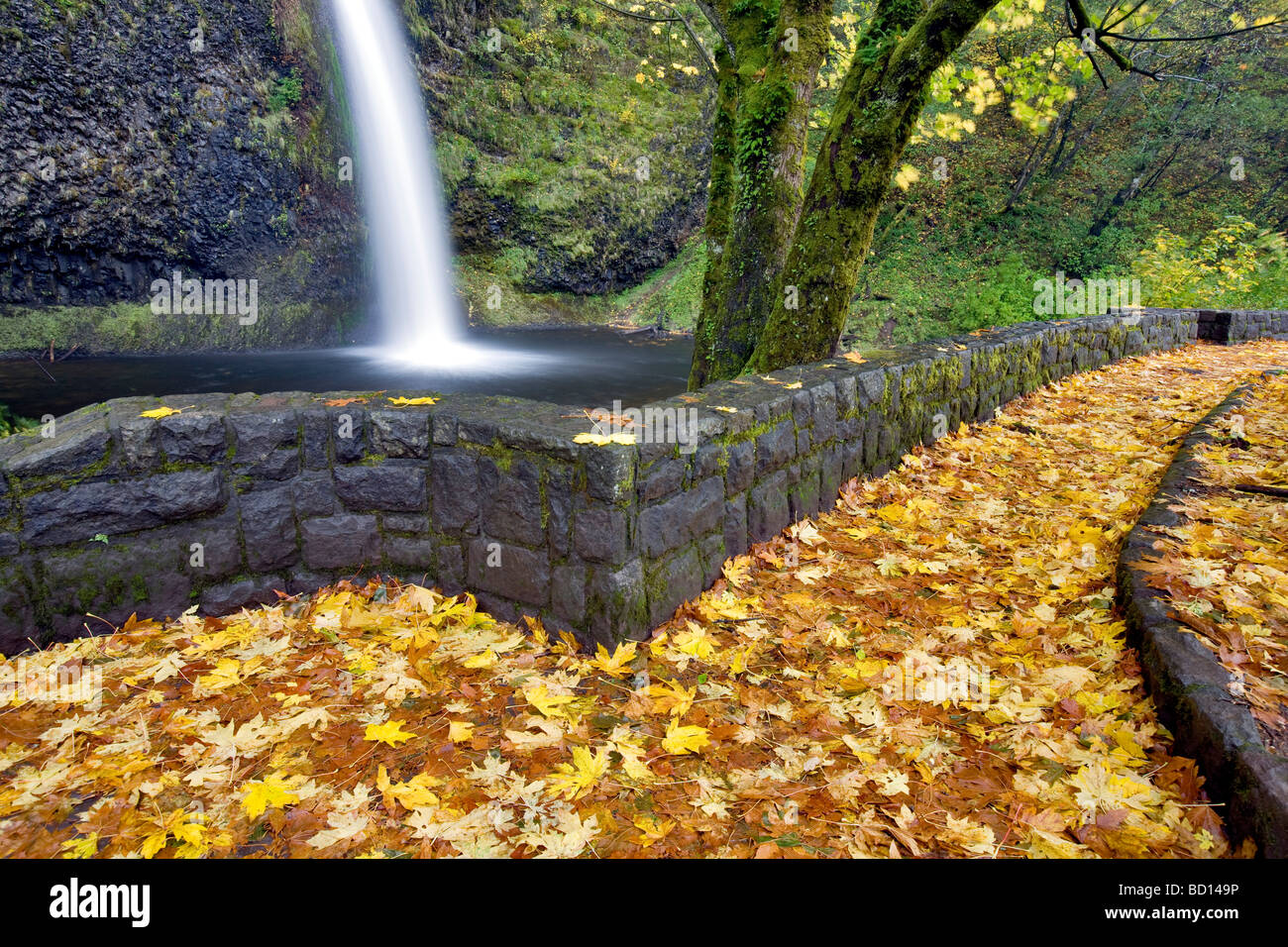 Horsetail falls and rock path with fall colored maple leaves Columbia River Gorge National Scenics Area Oregon - Stock Image