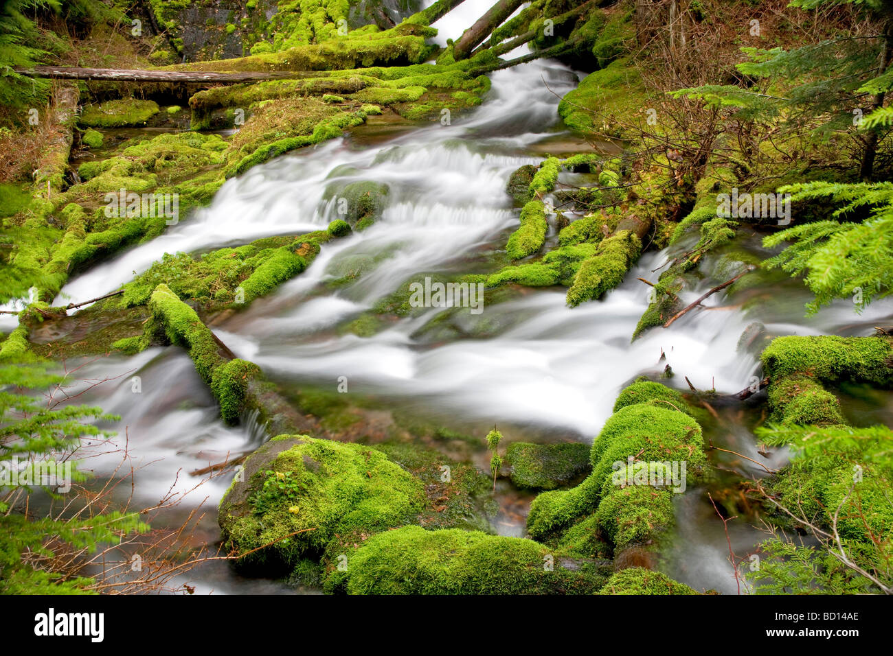 Big Spring Creek with mossy rocks Gifford Pinchot National forest Washington - Stock Image