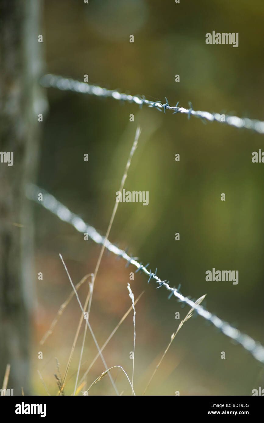Barbed wire fence, close-up - Stock Image