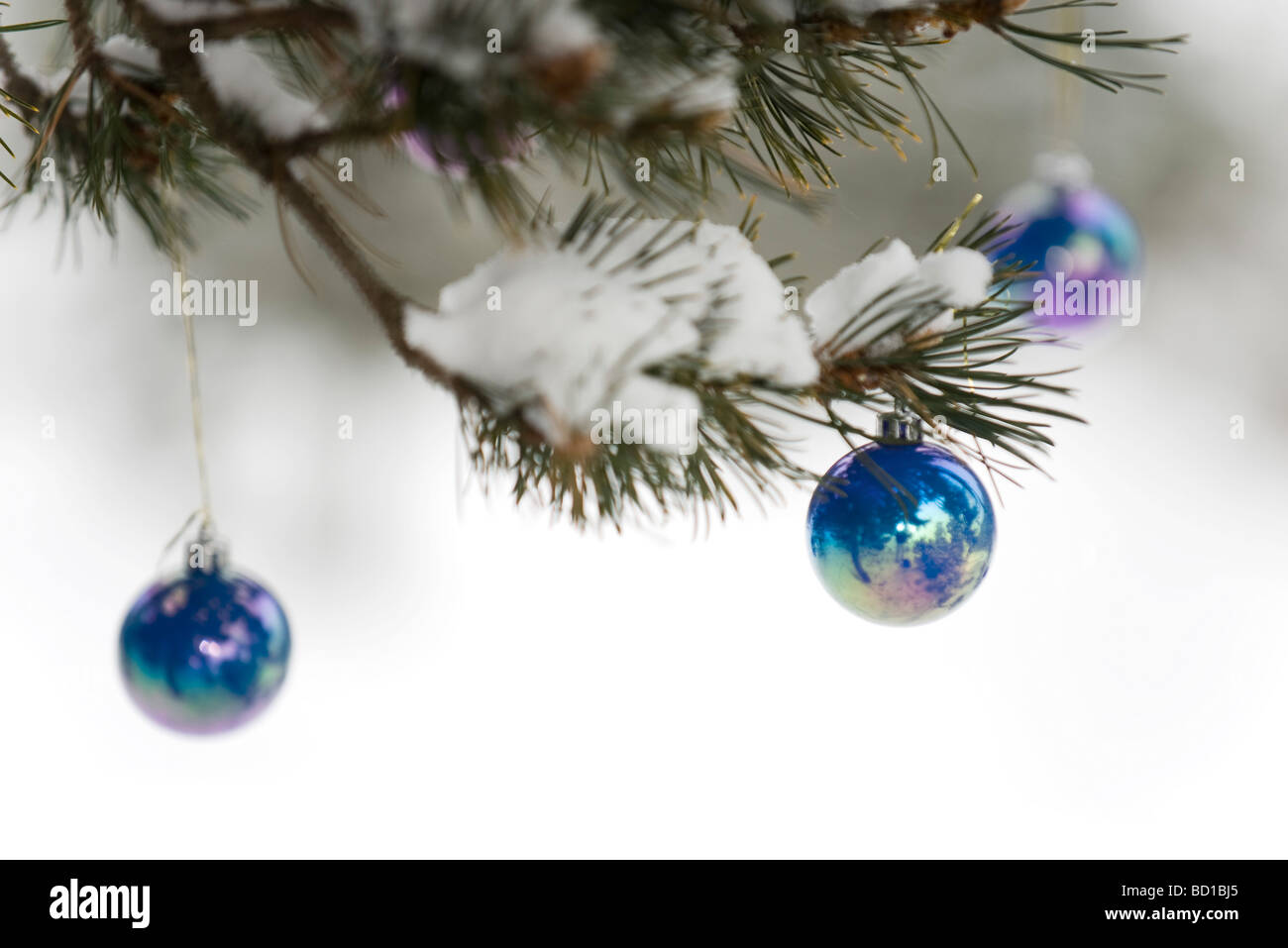 Christmas ornaments hanging from tree branch dusted with snow - Stock Image