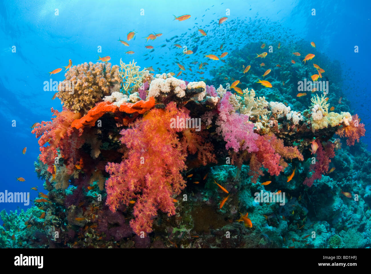 Colorful Fish Stock Photos & Colorful Fish Stock Images - Alamy
