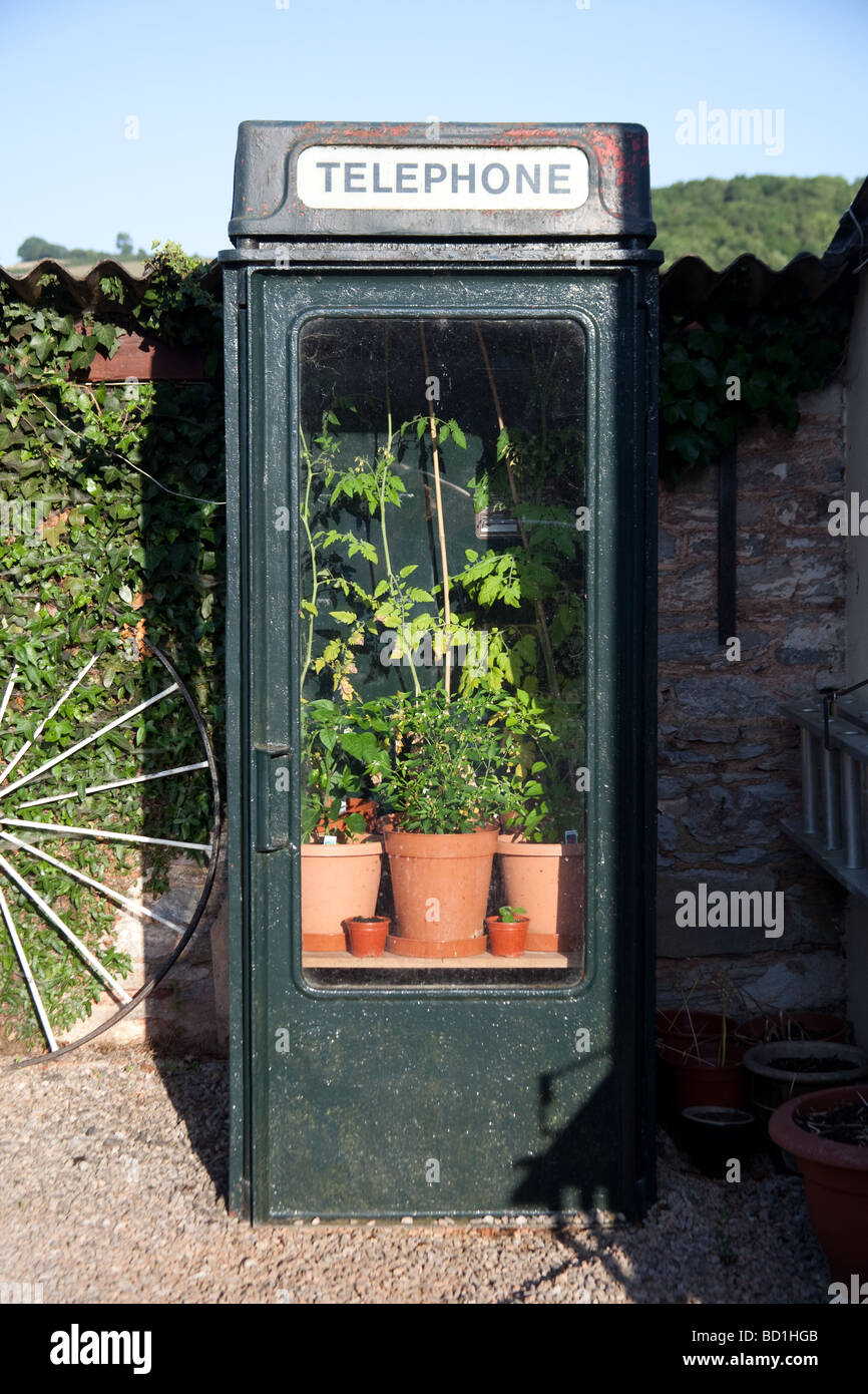Old telephone box being used as a greenhouse Totnes Devon England - Stock Image