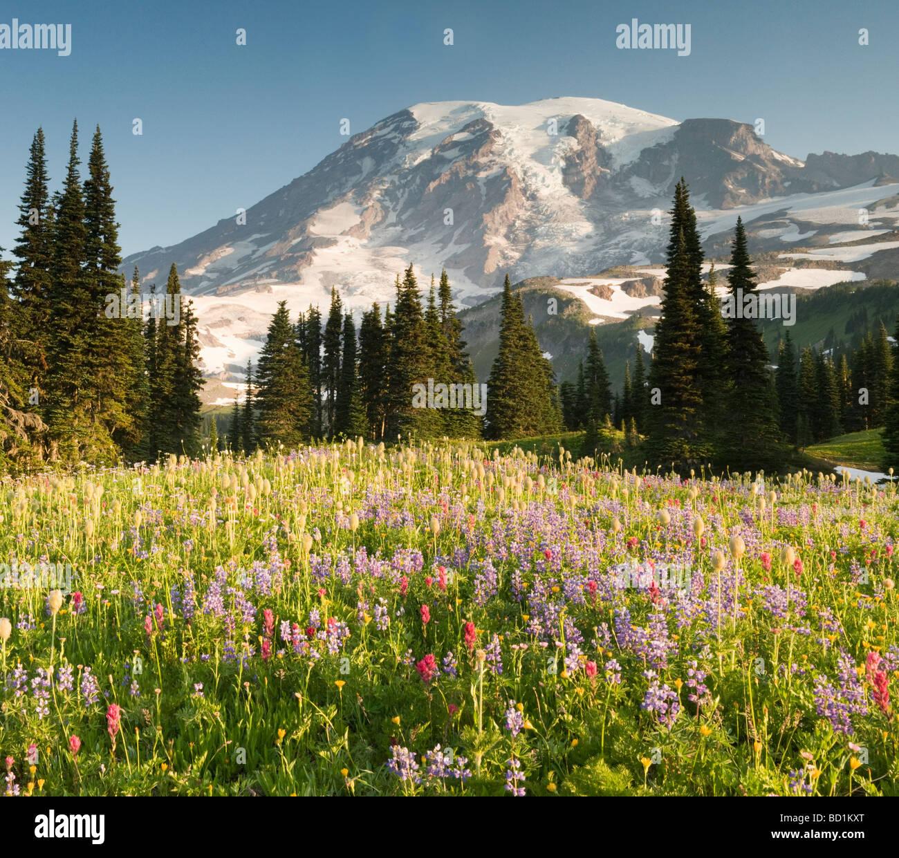 Summer Wildflowers, Paradise Meadows, Mount Rainier National Park, Washington JULY - Stock Image