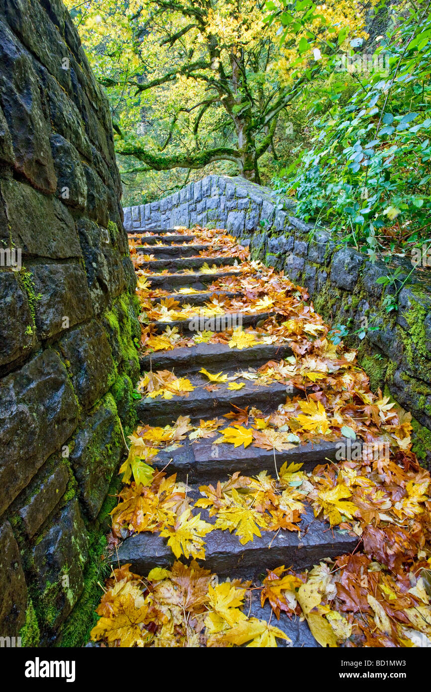 Rock steps at Horsetail Falls with fall colored maple leaves Columbia River Gorge National Scenics Area Oregon - Stock Image