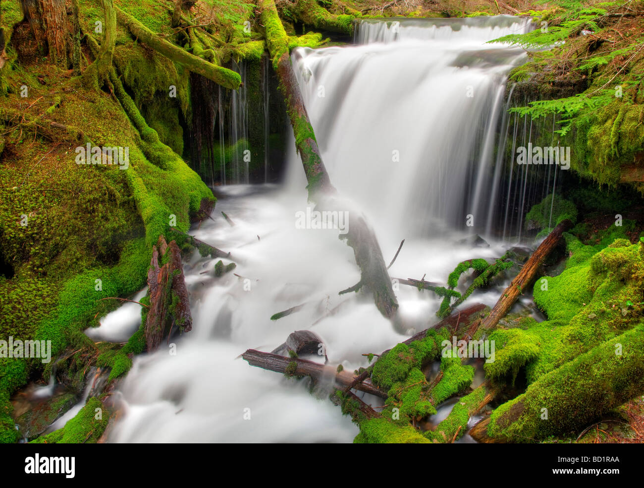 Big Spring Creek with mossy rocks and waterfalls Gifford Pinchot National forest Washington - Stock Image