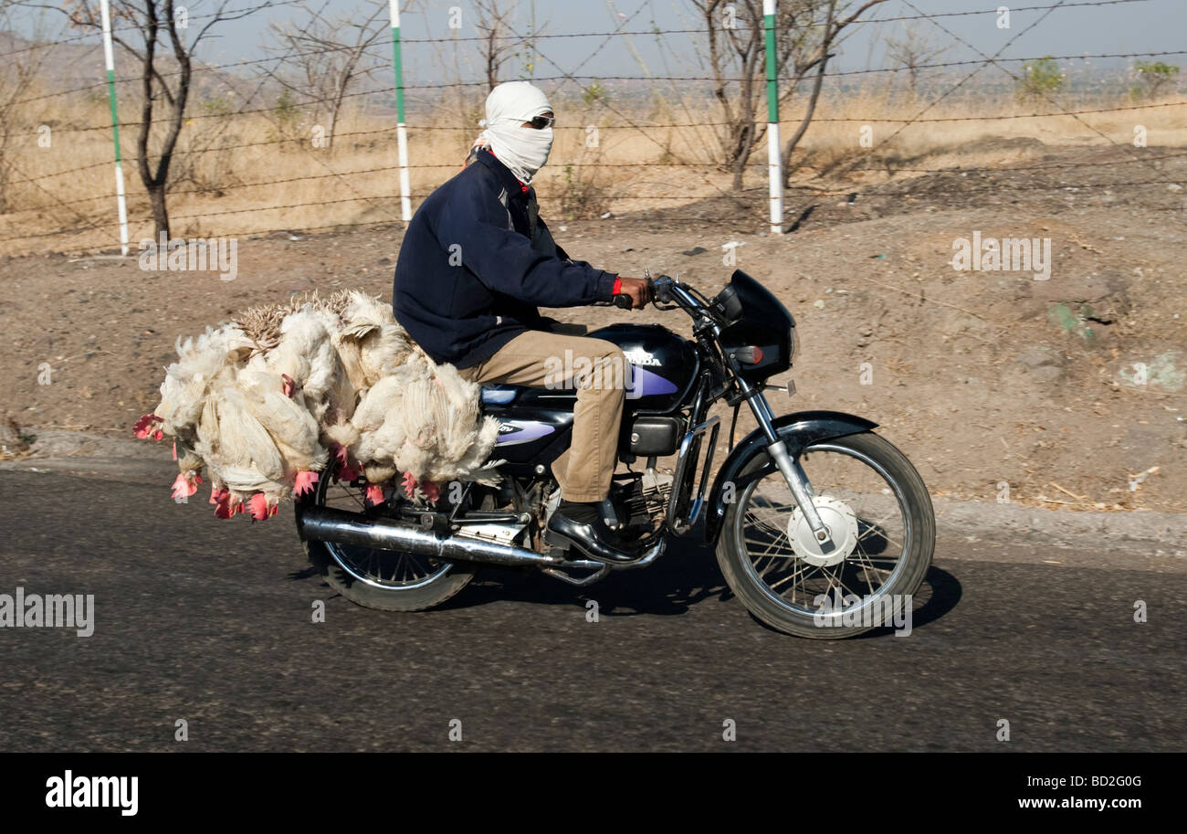 Man transports chickens on motorcycle India - Stock Image