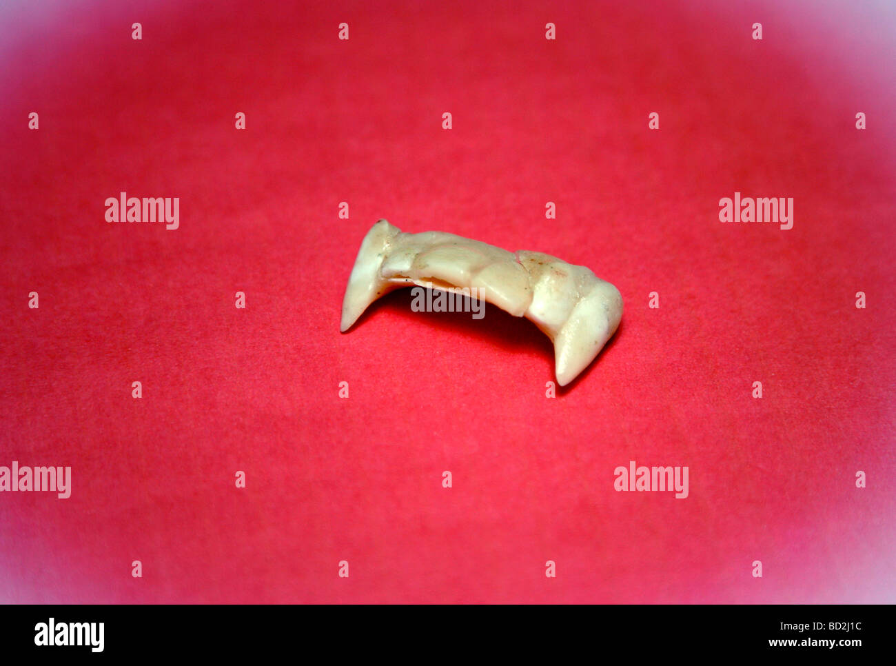 Fangs used in horror film make-up Stock Photo